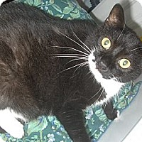 Adopt A Pet :: Thelma - Middletown, CT