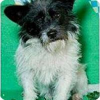 Adopt A Pet :: Matthew - soooo cute! - Phoenix, AZ