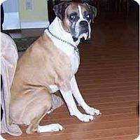 Adopt A Pet :: Gino - Albany, GA
