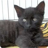Adopt A Pet :: Harry - Acme, PA