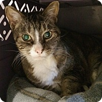Adopt A Pet :: Boots - Byron Center, MI