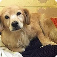 Adopt A Pet :: Haley - BIRMINGHAM, AL