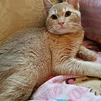Adopt A Pet :: Sandman - Monrovia, CA