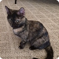 Adopt A Pet :: Twinkie - Kohler, WI