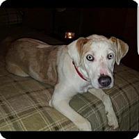 Adopt A Pet :: Chloe - Union Grove, WI