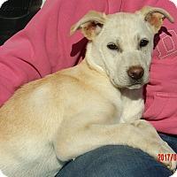 Adopt A Pet :: Genesis (15 lb) Video! - Sussex, NJ