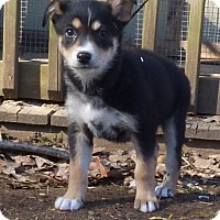 Adopt A Pet :: Heidi - Bedminster, NJ