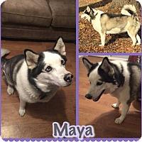 Adopt A Pet :: Maya - Longview, TX