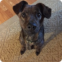 Adopt A Pet :: Maximus - Warren, MI