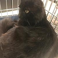 Adopt A Pet :: Gus - Yorba Linda, CA