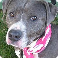 Adopt A Pet :: Lucy - Crescent City, CA