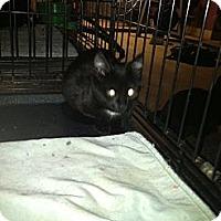 Adopt A Pet :: JUSTIN,JASON.JASPER - Clay, NY