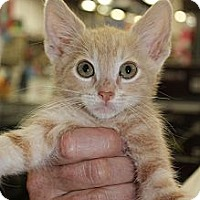 Adopt A Pet :: Angus - Santa Monica, CA