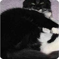 Adopt A Pet :: Isabelle - Riverside, RI
