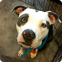 Adopt A Pet :: Sascha - Hollywood, FL