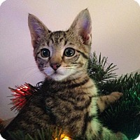 Adopt A Pet :: Clementine - Riverhead, NY