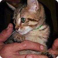 Adopt A Pet :: Punkin - Dallas, TX