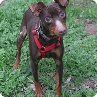 Adopt A Pet :: Sidekick - Winters, CA