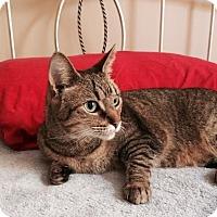 Adopt A Pet :: Roxanne - Harrisburg, NC