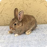 Adopt A Pet :: Phoebe - Bonita, CA