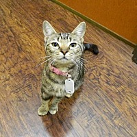 Adopt A Pet :: Evan Rachel - The Colony, TX
