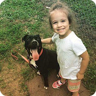 Pit Bull Terrier/American Staffordshire Terrier Mix Dog for adoption in Villa Park, Illinois - Sasha