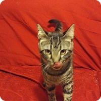 Adopt A Pet :: Jonathan (Foster) - Exton, PA