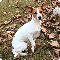 Adopt A Pet :: Lacey - North Brunswick, NJ