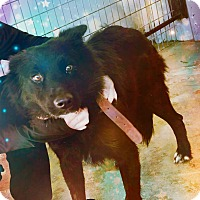 Adopt A Pet :: Gypsy - Odessa, TX