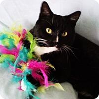 Adopt A Pet :: Hawthorne - N. Billerica, MA