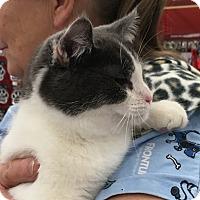 Adopt A Pet :: Congo - Germantown, MD