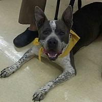 Adopt A Pet :: Uno - Carthage, NC