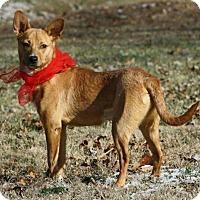 Adopt A Pet :: Cleo - Marion, KY