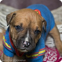 Adopt A Pet :: Daryl - Grand Rapids, MI