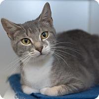 Adopt A Pet :: Amelia aka Imogenia (FCID# 02/23/2017-28 Trainer) - Greenville, DE