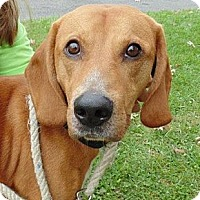 Adopt A Pet :: Tigger - Capon Bridge, WV