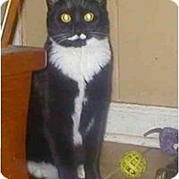 Adopt A Pet :: Blanche - Summerville, SC