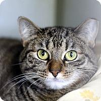 Adopt A Pet :: Bette Davis - Chicago, IL