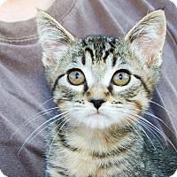 Adopt A Pet :: Cammi - Irvine, CA