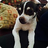 Adopt A Pet :: Abigail - Toledo, OH