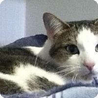 Adopt A Pet :: Duchess - Hamilton, ON