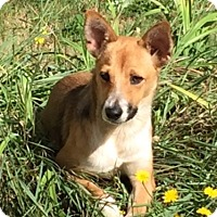 Adopt A Pet :: Vicky - Adoption Pending - Gig Harbor, WA