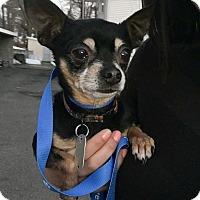 Adopt A Pet :: David - Bernardston, MA