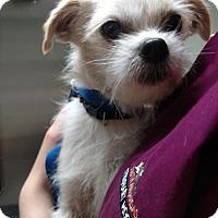 Adopt A Pet :: Alfie CJ in AR - Providence, RI
