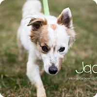 Adopt A Pet :: Jack - Kendallville, IN