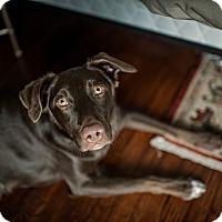 Adopt A Pet :: Opie - Portland, OR