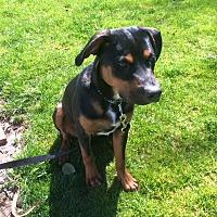 Adopt A Pet :: Bruno - Garwood, NJ