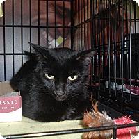Adopt A Pet :: Jessalyn - Avon, OH