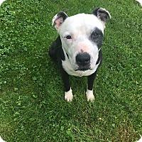 Adopt A Pet :: Bobo - Dayton, OH