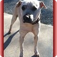 Adopt A Pet :: Tinkerbell (Urgent!) $250 fee - Staunton, VA